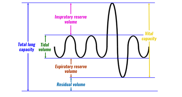 Respiratory volumes ccuart Choice Image