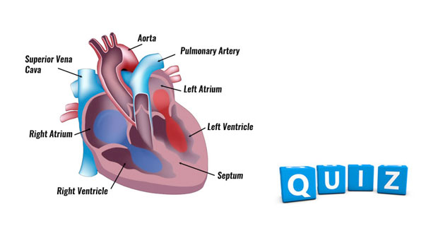 Circulatory quizzes