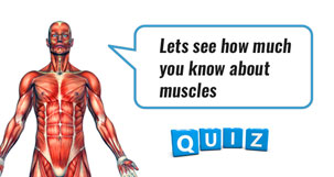 Muscles quiz