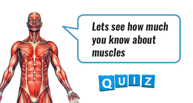 Muscles Quizzes | Anatomy & Physiology Quizzes | Online