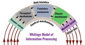Information processing models