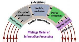 Information processing models
