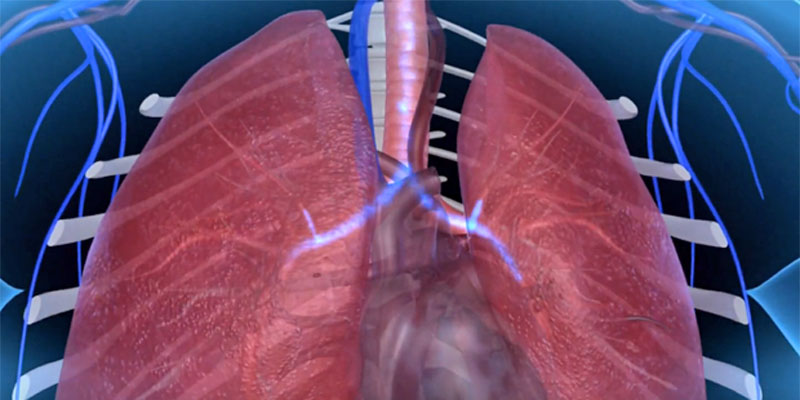 Cardiorespiratory system GCSE PE quizzes