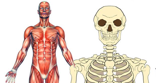 GCSE PE Musculoskeletal system quizzes