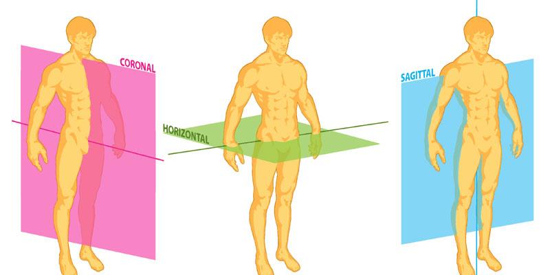 Movement analysis quizzes